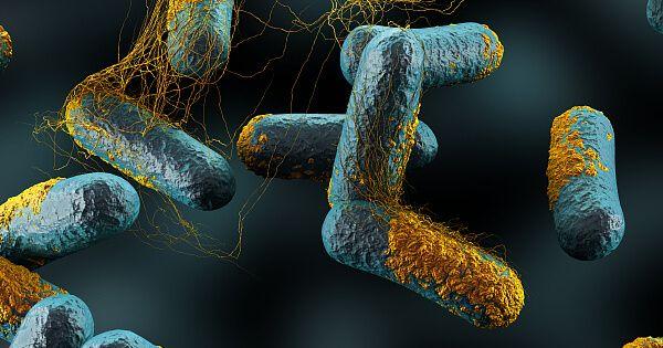 نقش پروبیوتیکها در سلامتی